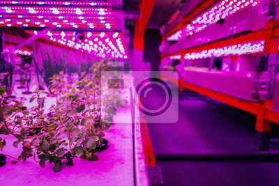 Papiers peints Various herbs and vegetables grow under special LED lights belts in aquaponics system combining fish aquaculture with hydroponics, cultivating plants in water under artificial lighting, organic food c