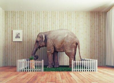 Papiers peints Veau d'éléphant - animal de compagnie