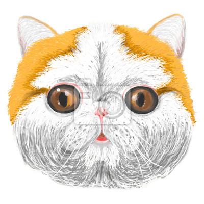 Vecteur croquis du visage d'un chaton stylisée, en souriant, amical, jeune, chat mignon, couleur pêche, les yeux brillants bruns. Chat pédigrées. Portrait de chat Scottish Fold, Vector.