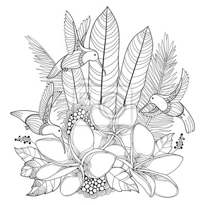 Papiers Peints Vector Flying Hummingbird Ou Colibri Fleurs Plumeria Et Feuille