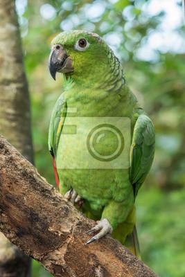 Vert, amazon, perroquet, séance, branche, forêt, fond