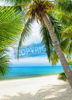 Papiers peints Vert, arbre, blanc, sable, plage