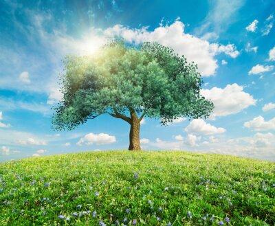 Papiers peints Vert, arbre, ressort, paysage