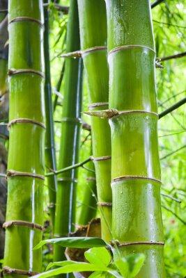 Papiers peints Vert, bambou, nature, Arrière-plans