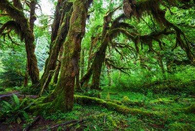 Papiers peints Vert forêt