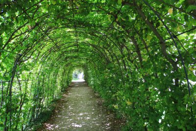 Papiers peints Vert, tunnel, jardin