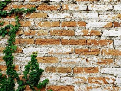 Papiers peints Vieux, brique, mur, creeper