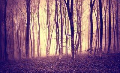 Papiers peints Vintage violet jaune coloré lumière mystique dans le paysage de forêt effrayant.