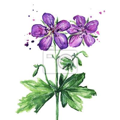 Violet Sauvage Fleur Aquarelle Illustration Papier Peint