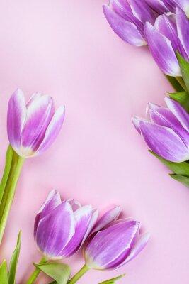 Papiers peints Violet, tulipes, rose, fond