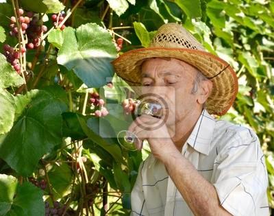 Viticulteur principal