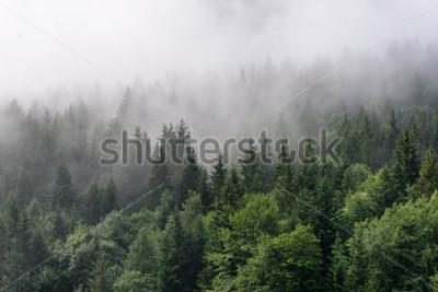 Papiers peints Vue d'ensemble de la forêt à feuilles persistantes - Cime des grands arbres verts avec un épais brouillard roulant dans un désert luxuriant