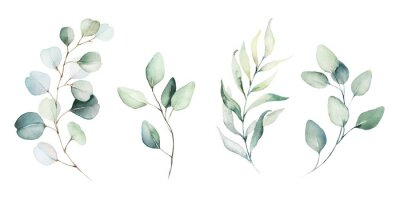 Papiers peints Watercolor floral illustration set - green leaf branches collection, for wedding stationary, greetings, wallpapers, fashion, background. Eucalyptus, olive, green leaves, etc.