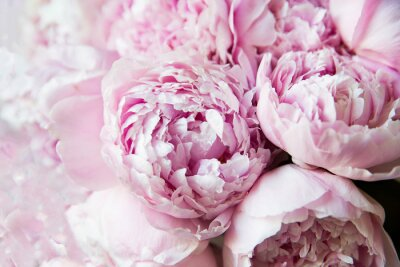 Papiers peints White and pink peonies. Background, wallpaper..