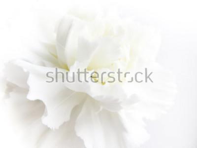 Papiers peints White flowers background. Macro of white petals texture. Soft dreamy image