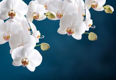 Papiers peints White orchid