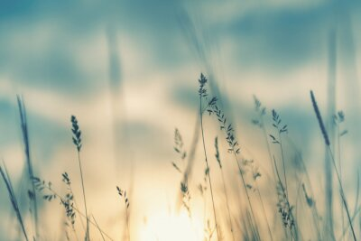 Papiers peints Wild grass in the forest at sunset. Macro image, shallow depth of field. Abstract summer nature background. Vintage filter