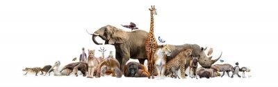 Papiers peints Wild Zoo Animals on White Web Banner