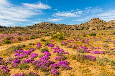 Papiers peints Wildblumen dans Südafrika