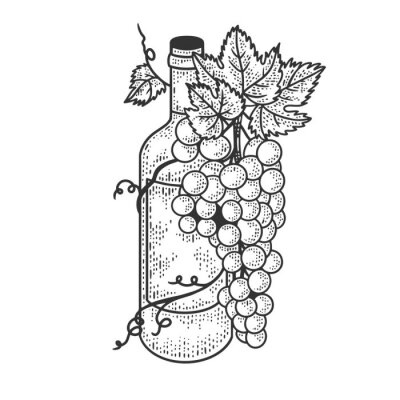 Wine bottle and grapes sketch engraving vector illustration. T-shirt apparel print design. Scratch board imitation. Black and white hand drawn image.