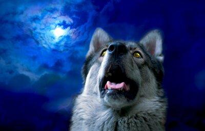 Papiers peints Wolf / Wolf la nuit, sélectionnez le focus sur les yeux. Retouche numérique.