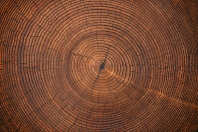 Papiers peints wood texture of old stump. natural background of cut trunk with annual rings