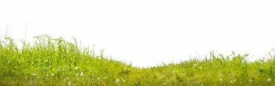 Papiers peints Земля с зеленой травой на белом фоне
