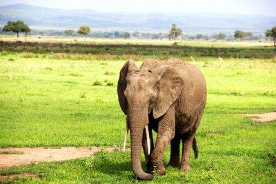 Papiers peints Африканский слон