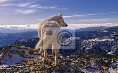 Papiers peints Волк