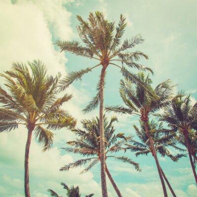 Papiers peints Coconut palmier et nuages ciel bleu avec des tons vintage.