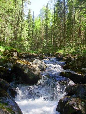 Papiers peints La rivière de montagne dans la forêt de conifères, Горная река в хвойном лесу