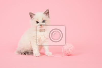 Mignon, longhair, bébé, ragdoll, chat, séance, balle, rose, laine, rose, fond »
