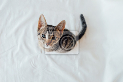 Young European Shorthair cat sitting on white background, top view. Space for text. Mackerel tabby coat color. Cute little kitten looking at you.