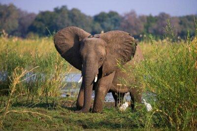 Papiers peints Zambie. Parc national du Bas-Zambèze. Zambèze.