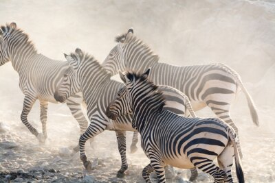 Papiers peints Zèbres, courant, Namibie, afrique