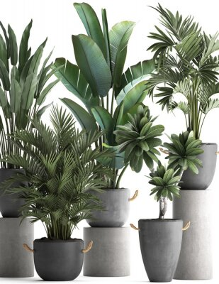 Posters 3d illustration of tropical plants on white background