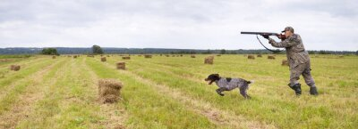 Posters a hunter with a dog shoots a shotgun in a mown field