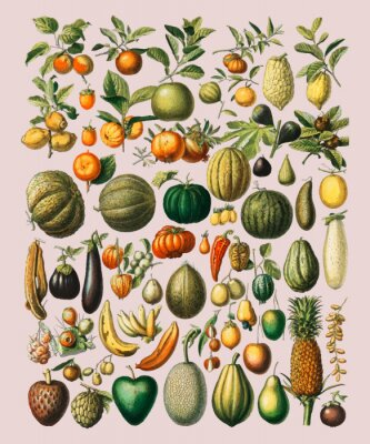Posters A vintage illustration of a wide variety of fruits and vegetables from the book, Nouveau Larousse Illustre (1898), by Larousse, Pierre, Augé and Claude, Digitally enhanced by rawpixel.