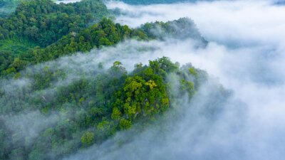 Posters Aerial view of morning mist at tropical rainforest mountain, background of forest and mist, Aerial top view background forest.