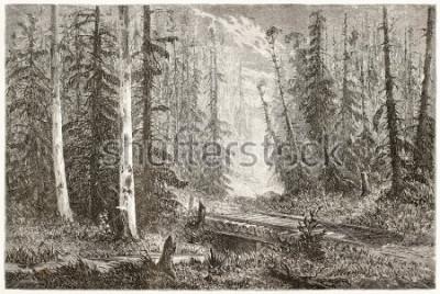 Posters Ancienne illustration de forêt de sapin russe. Créé par Moynet, publié sur Le Tour du Monde, Paris, 1867