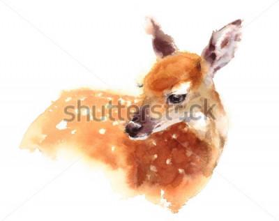 Posters Aquarelle bébé cerf peint à la main Illustration de fauve isolé sur fond blanc