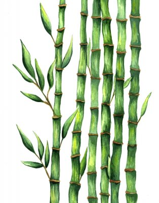 Posters Aquarelle illustration bambou dessiné à la main