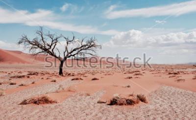 Posters Arbre du désert