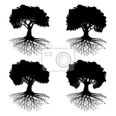 Posters Arbre, racines
