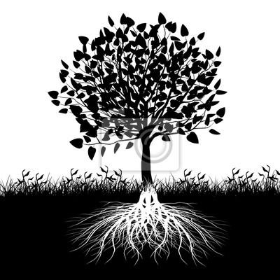 Posters Arbre, racines, silhouette