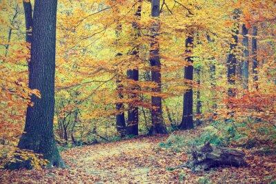 Posters Arbres aux couleurs automnales en forêt, look vintage