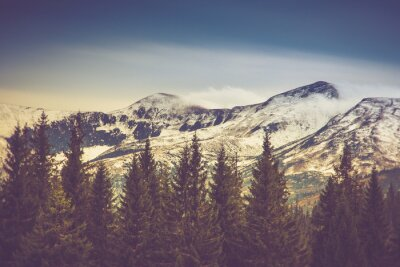 Posters Arbres d'automne dans la forêt et la montagne couverte de neige dans la distance.