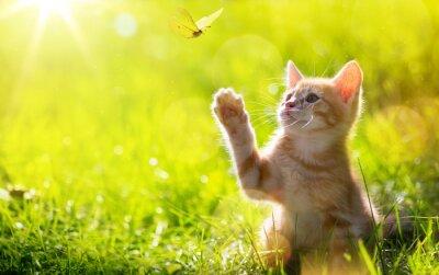 Posters art Jeune chat / chaton chasse un papillon avec Contre-jour