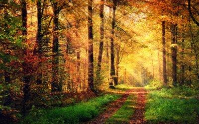 Posters Autumn forest paysages avec des rayons de lumière chaude