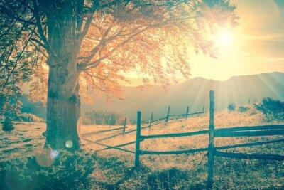Posters Autumn tree Vintage au coucher du soleil avec des rayons de soleil, les montagnes